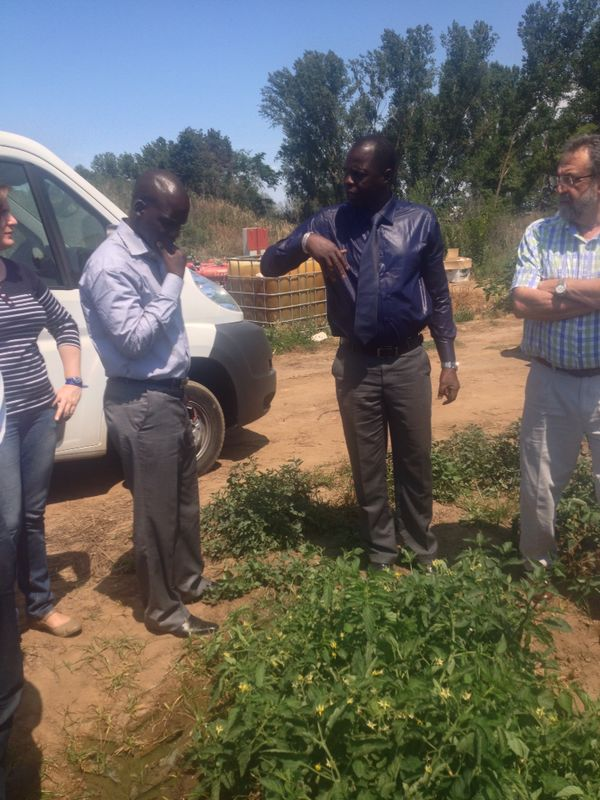 Visit to a Tomatoes Farm
