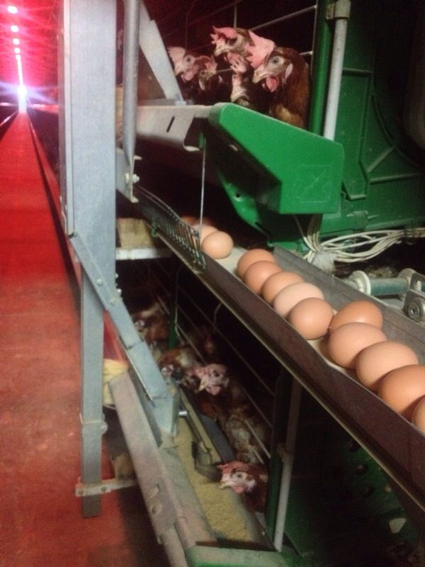 Visit to a Factory of Eggs